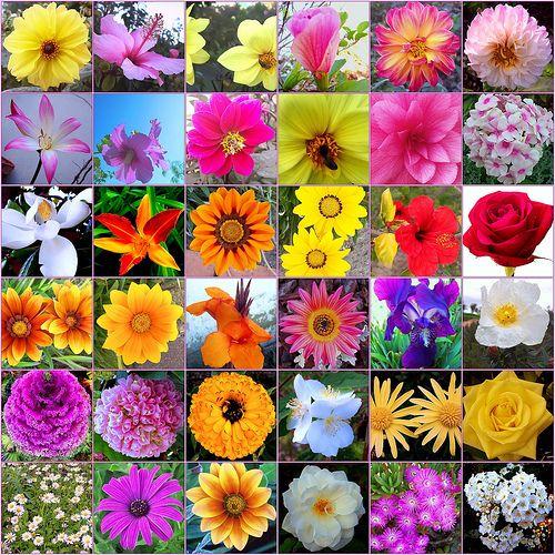 Flores for Todas las plantas ornamentales